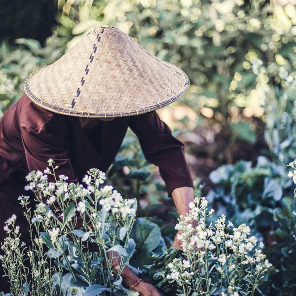 Desa Seni harvest